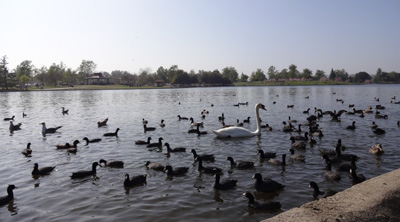 Reviews and photos of things to do in la lake balboa los for Lake fishing near los angeles
