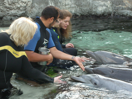 Getting up close feeding, playing, and interacting with dolphins during our Marine Mammal Keeper Experience at SeaWorld